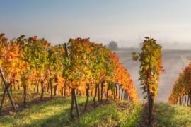 viticole haas avocats