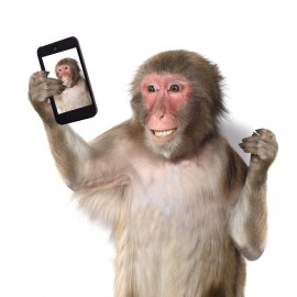 Funny monkey taking a selfie and smiling at camera